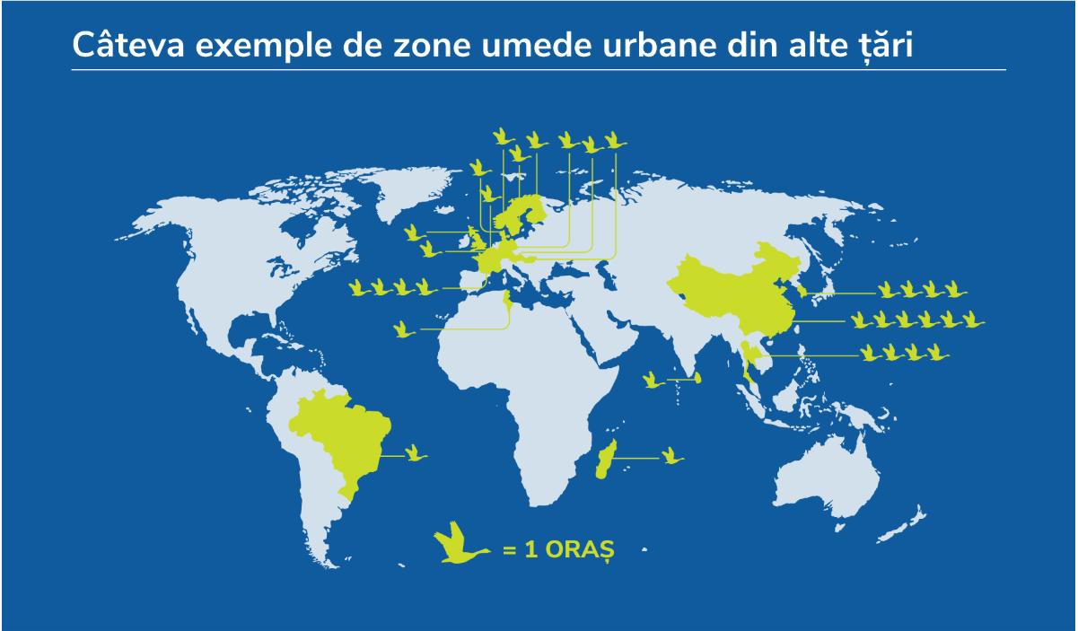 Zonele umede dau viață orașului