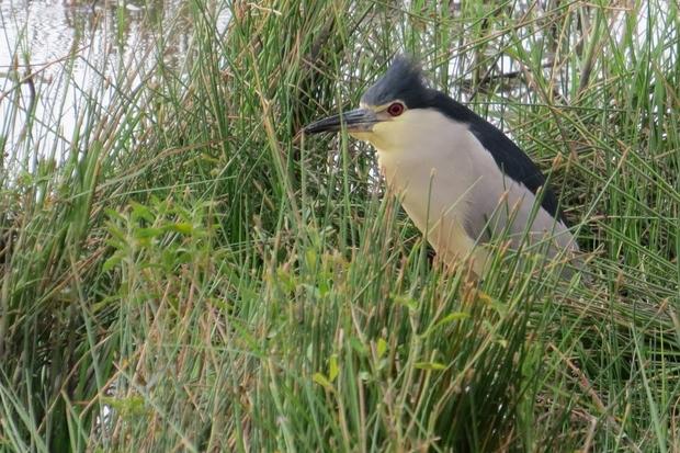 Birdwatching pe caniculă