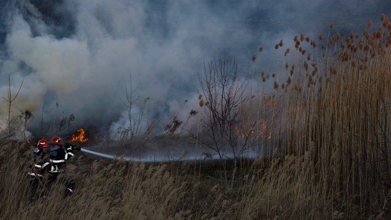 Incendiu în Parcul Natural Văcărești  24.02.2020