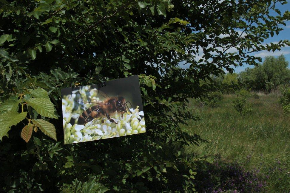 Albine, bondari, fluturi și alte insecte polenizatoare din Parcul Natural Văcărești