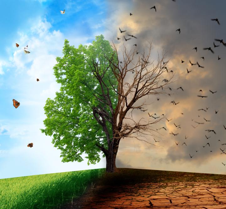 Responsabil de mediu / Autorizat ANC